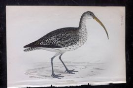 F. O. Morris 1867 Hand Col Print. Curlew